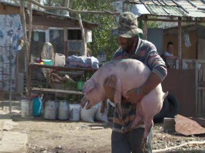 romania-va-primi-50-de-milioane-de-euro-pentru-despagubirea-fermierilor-afectati-de-pesta-porcina-africana