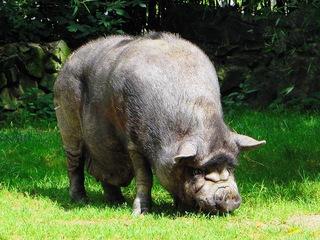 evaziune-de-doua-milioane-de-euro-din-afaceri-cu-carne-de-porc