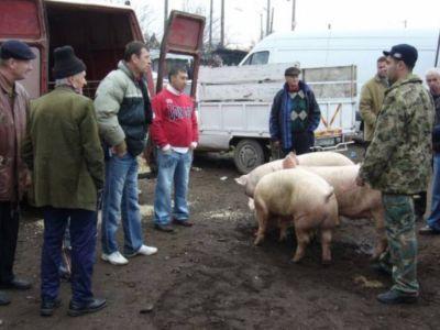 campanii-ample-de-informare-a-populatiei-cu-privire-la-riscurile-pestei-porcine-africane