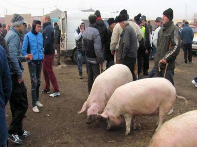 autoritatile-nu-stiu-inca-data-la-care-se-vor-redeschide-targurile-de-animale