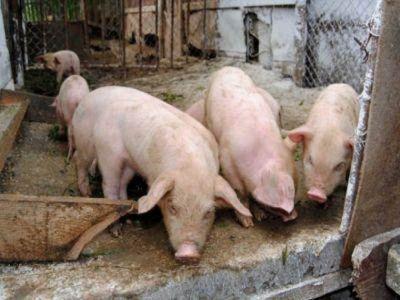 comisia-europeana-aloca-fonduri-pentru-zonele-afectate-de-pesta-porcina-africana