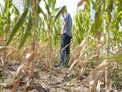fermierii-afectati-de-furtuna-din-vestul-tarii-vor-primi-despagubiri