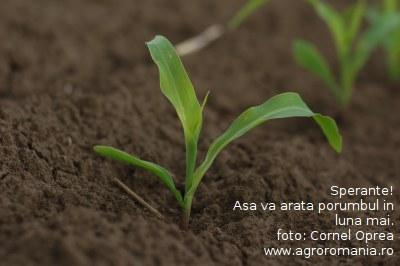 cum-va-fi-vremea-in-lunile-aprilie-si-mai-o-perioada-decisiva-pentru-agricultura