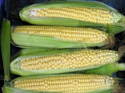 ansvsa-anunta-ca-monitorizeaza-prezenta-ingredientelor-modificate-genetic-in-alimente