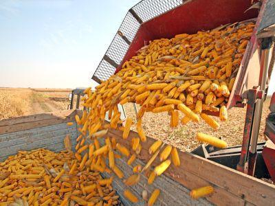 fermierii-se-asteapta-la-o-crestere-a-pretului-cerealelor-dupa-recoltare