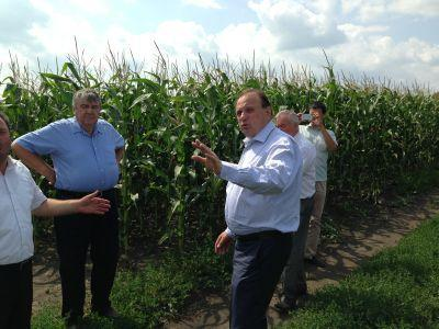 agricultorii-din-r-moldova-spera-la-productii-de-3-tha-la-porumb