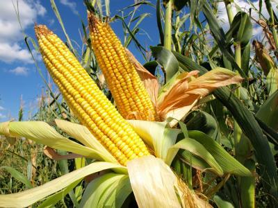 copa-cogeca-solutiile-fitosanitare-sunt-o-necessitate-stringenta-in-ue-pentru-protejarea-sigurantei-sidiversitatii-produselor-agroalimentare