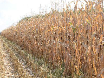 buletin-agrometeorologic-pentru-perioada-29-octombrie-2-noiembrie