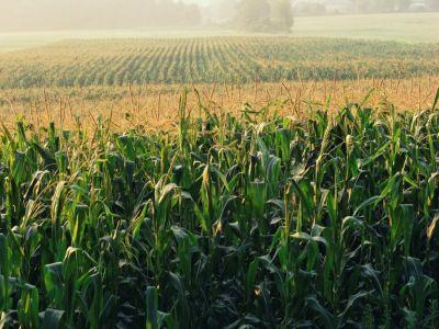Ce spun reprezentantii fermierilor despre situatia culturilor de toamna