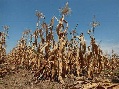 fermierii-afectati-de-seceta-ar-putea-primi-pana-la-sfarsitul-anului-90-la-suta-din-valoarea-despagubirilor