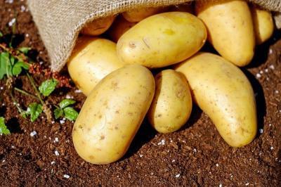 productia-nationala-de-cartofi-mai-mica-in-2020