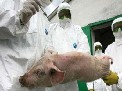 noi-focare-de-pesta-porcina-africana-confirmate-in-tara