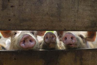 ministrul-agriculturii-comisia-europeana-nu-mai-are-incredere-in-noi