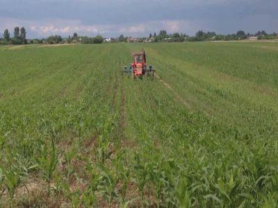 buletin-agrometeorologic-pentru-perioada-28-iunie-4-iulie