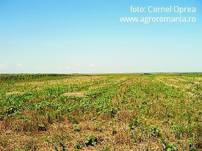 ultima-versiune-a-legii-terenurilor-agricole-iata-cum-vor-putea-fi-vandute-terenurile-incepand-de-la-1-ianuarie