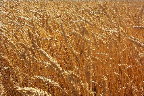 preturile-cerealelor-in-portul-constanta-actualizate-23-noiembrie