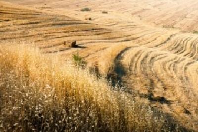 ministerul-nu-poate-interveni-in-schimbarea-pretului-la-cereale