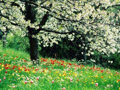 buletin-agrometeorologic-pentru-perioada-8-12-aprilie