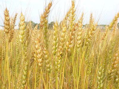 inca-patru-organizatii-au-aderat-la-federatia-pro-agro
