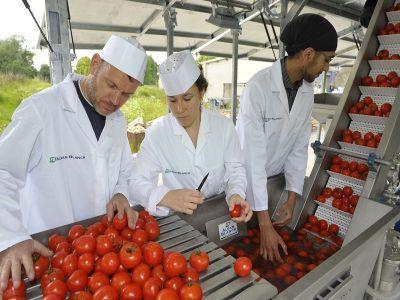afir-pune-la-bataie-112-milioane-de-euro-pentru-investitii-in-procesarea-si-marketingul-produselor-agricole-si-pomicole