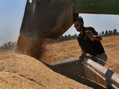 date-statistice-finale-privitoare-la-valoarea-productia-agricola-a-anului-2011
