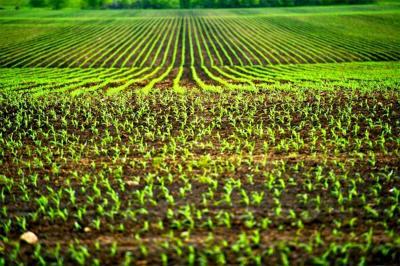 productia-vegetala-mai-generoasa-in-vestul-romaniei
