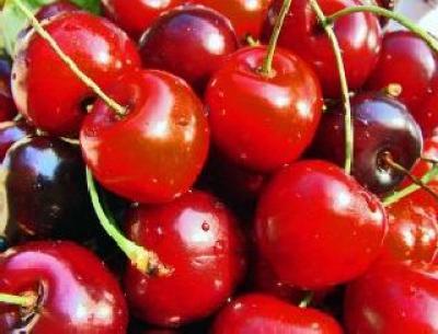 producatorul-de-fructe-domeniile-ostrov-si-a-marit-recolta-de-cirese-si-caise