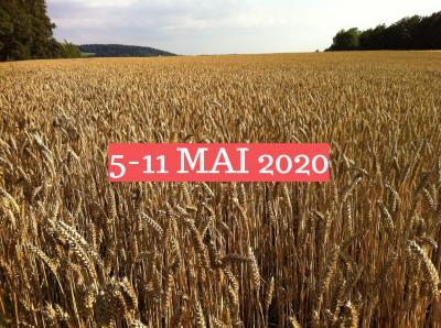 prognoza-agrometeorologica-05-12-mai