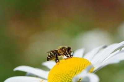 programul-national-apicol-cererile-depuse-pana-la-2-august-inclusiv