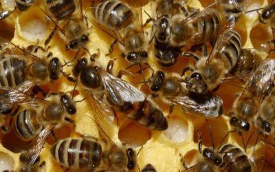 ce-actiuni-sunt-prevazute-in-programul-national-apicol-pentru-perioada-2014-2016