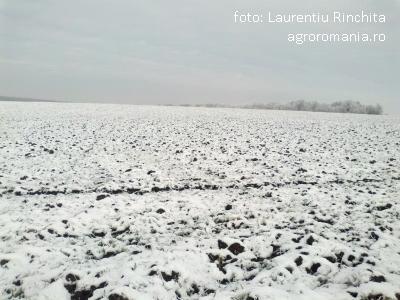 scoaterea-solurilor-din-circuitul-agricol-ingrijoreaza-autoritatile-europene