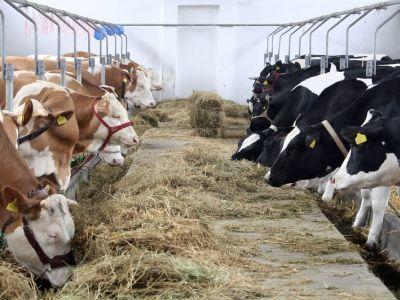 efectele-negative-ale-excesului-de-proteine-in-hrana-animalelor