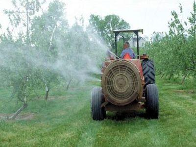 tratamente-fitosanitare-in-culturile-de-prun