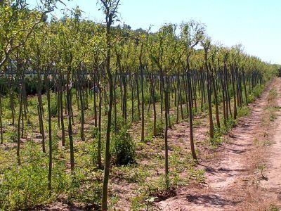 romsilva-investeste-intr-o-fabrica-de-puieti-forestieri