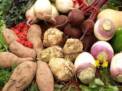 combaterea-daunatorilor-si-bolilor-la-plantele-radacinoase
