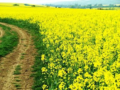 buletin-agrometeorologic-pentru-perioada-26-30-iunie