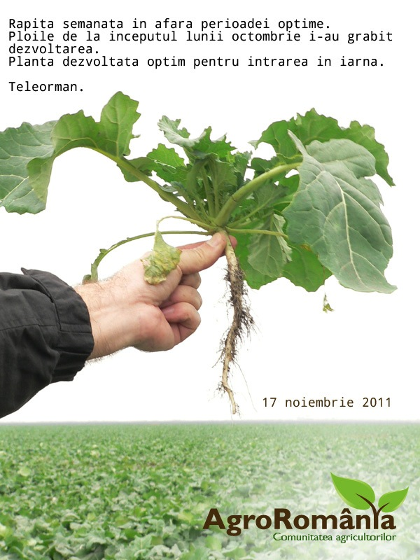 prognoza-agrometeorologica-pentru-perioada-17-23-noiembrie-in-sfarsit-vin-ploile-vezi-in-articol-rezerva-de-apa-din-sol-si-poze-cu-stadiul-de-vegetatie-la-grau-si-rapita