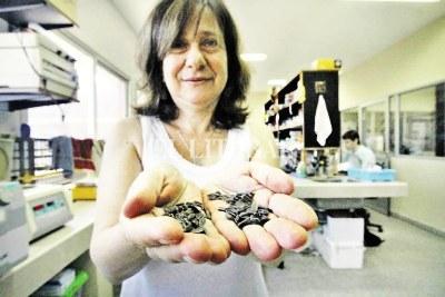 argentinienii-au-transferat-gena-tolerantei-la-seceta-de-la-floarea-soarelui-la-soia-grau-si-porumb