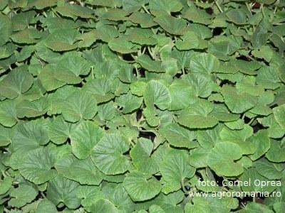 masuri-fitosanitare-la-producerea-rasadurilor-de-legume