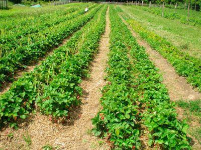 ca-inseamna-conceptul-de-agricultura-ecologica