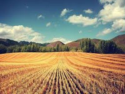 buletin-agrometeorologic-pentru-perioada-26-august-1-septembrie