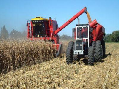 caldura-si-inundatiile-au-afectat-recolta-de-cereale