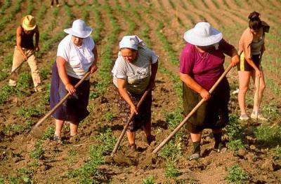 eurostat-aproape-un-sfert-dintre-romani-sunt-implicati-in-agricultura