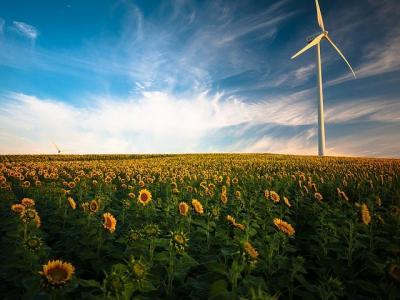 productie-record-de-floarea-soarelui-in-2021-insa-materia-prima-merge-la-export