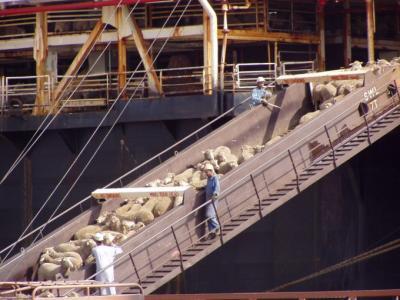 romania-prima-tara-preocupata-de-bunastarea-animalelor-in-timpul-transportului-maritim