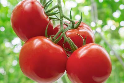 termen-nou-pentru-valorificarea-tomatelor-din-sere-si-solarii