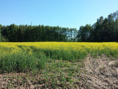 buletin-agrometeorologic-pentru-perioada-28-mai-1-iunie
