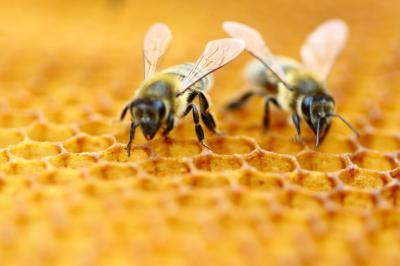 in-17-tari-din-ue-a-fost-pornita-campania-pentru-salvarea-albinelor