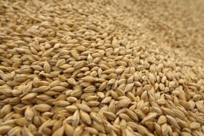 specialistii-recomanda-samanta-tratata-cu-insecto-fungicide