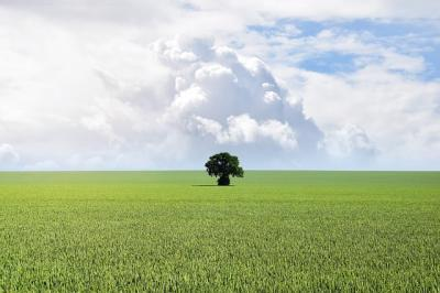 orasul-tarnaveni-preia-modelul-san-salvo-agricultorii-uniti-sub-o-singura-umbrela